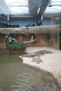 Beekse Bergen, Nijlpaarden en Krokodillen (3)